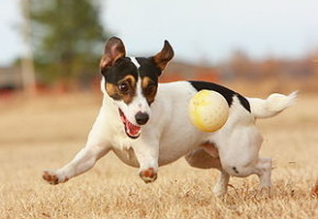 300px-JRT_with_Ball
